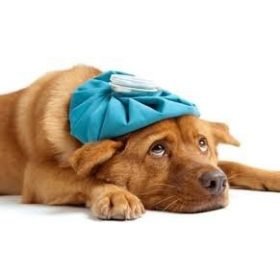 Hűsítő termékek kutyáknak